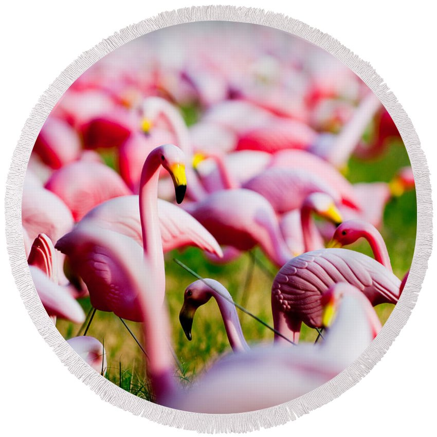 Austin Round Beach Towel featuring the photograph Flamingo 7 by Sean Wray