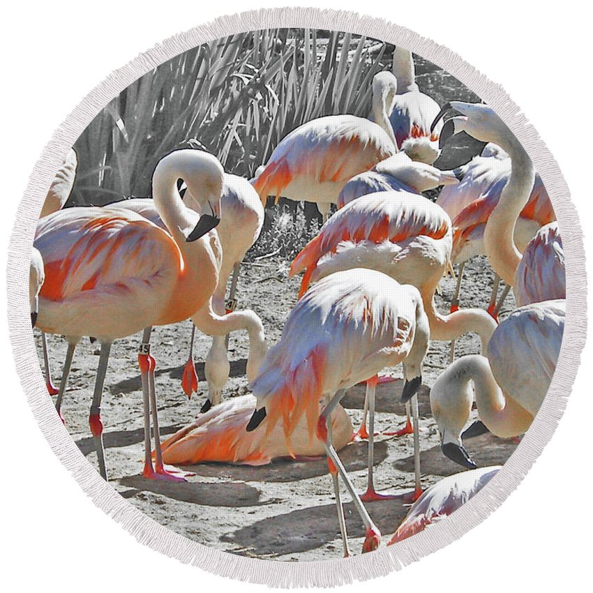 Zoo Round Beach Towel featuring the photograph Flamingos by Lizi Beard-Ward