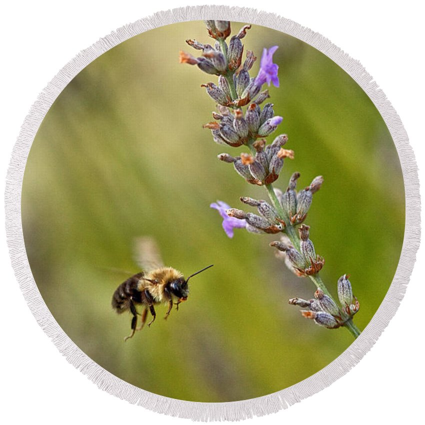 Bumble Bee Round Beach Towel featuring the photograph Flight Of The Bumble by Karol Livote