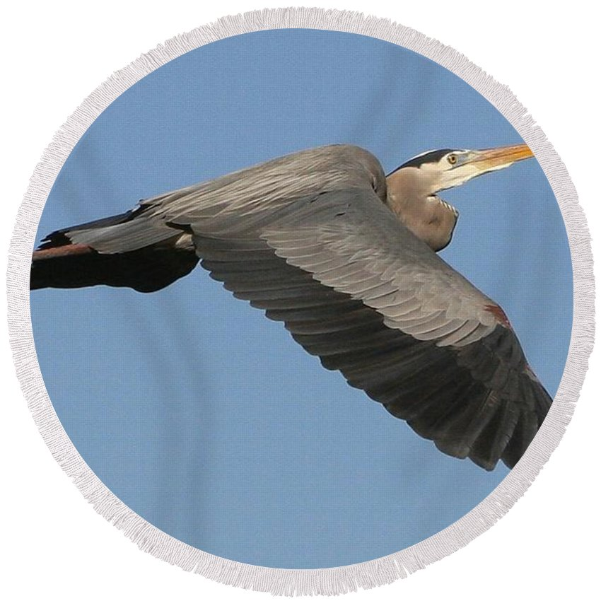 Birds Round Beach Towel featuring the photograph Flight Of The Great Blue Heron by Myrna Bradshaw