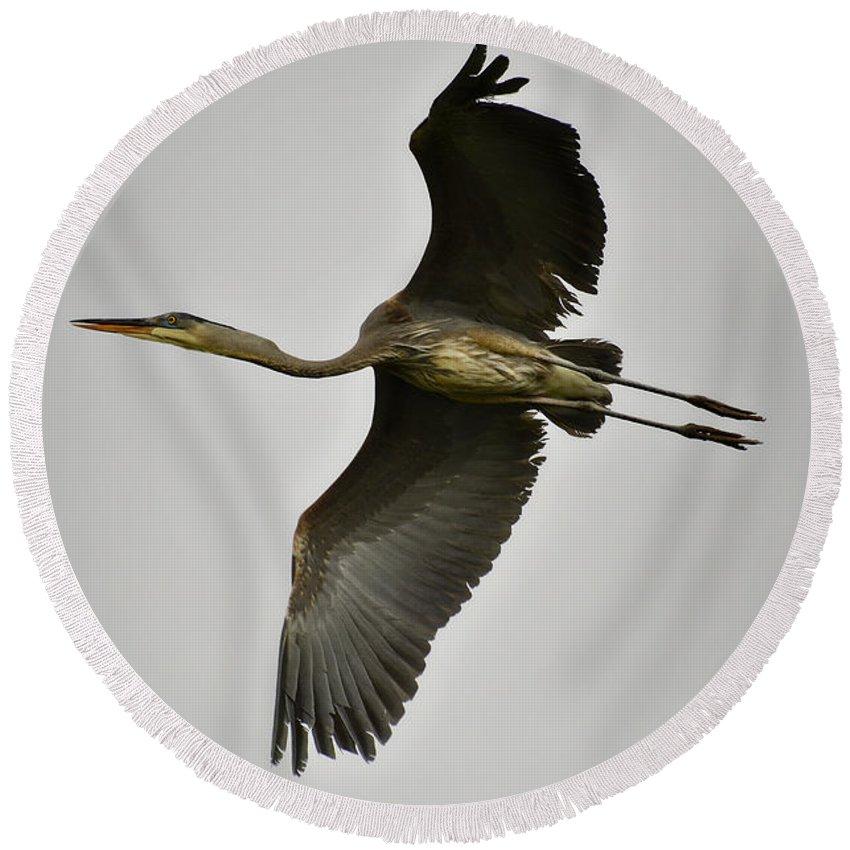 Great Blue Heron Round Beach Towel featuring the photograph Flight Of The Great Blue Heron by Saija Lehtonen