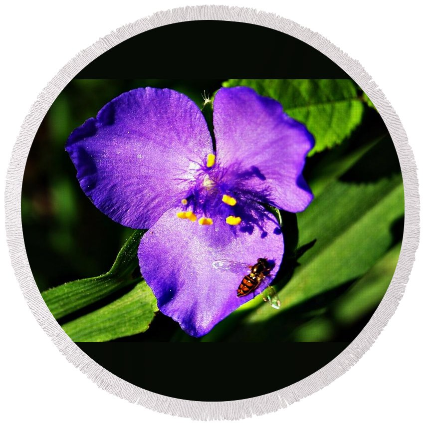 Flower Round Beach Towel featuring the photograph Flower And Bee by Joe Faherty