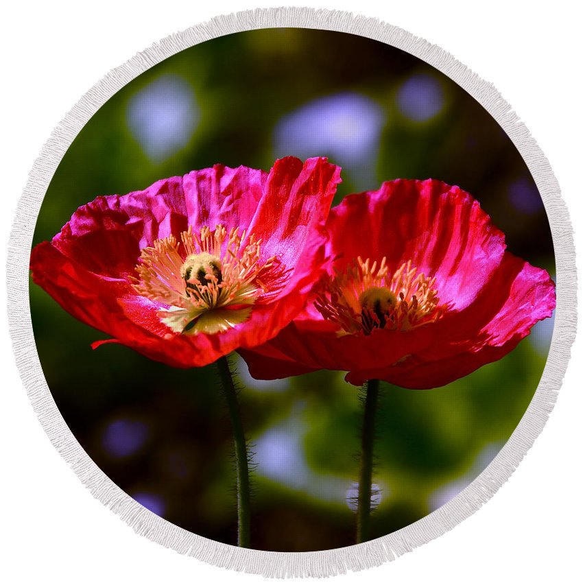 Red Poppies Round Beach Towel featuring the photograph Flowers Are For Fun by Byron Varvarigos