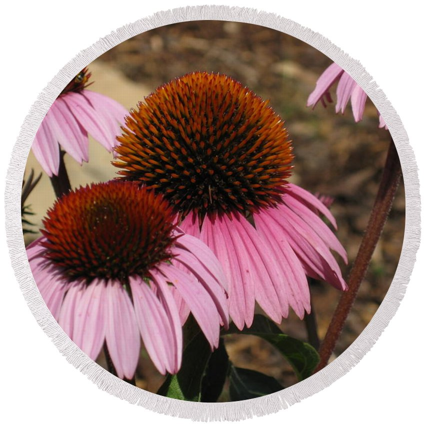 Coneflowers Round Beach Towel featuring the photograph Coneflowers by Megan Cohen