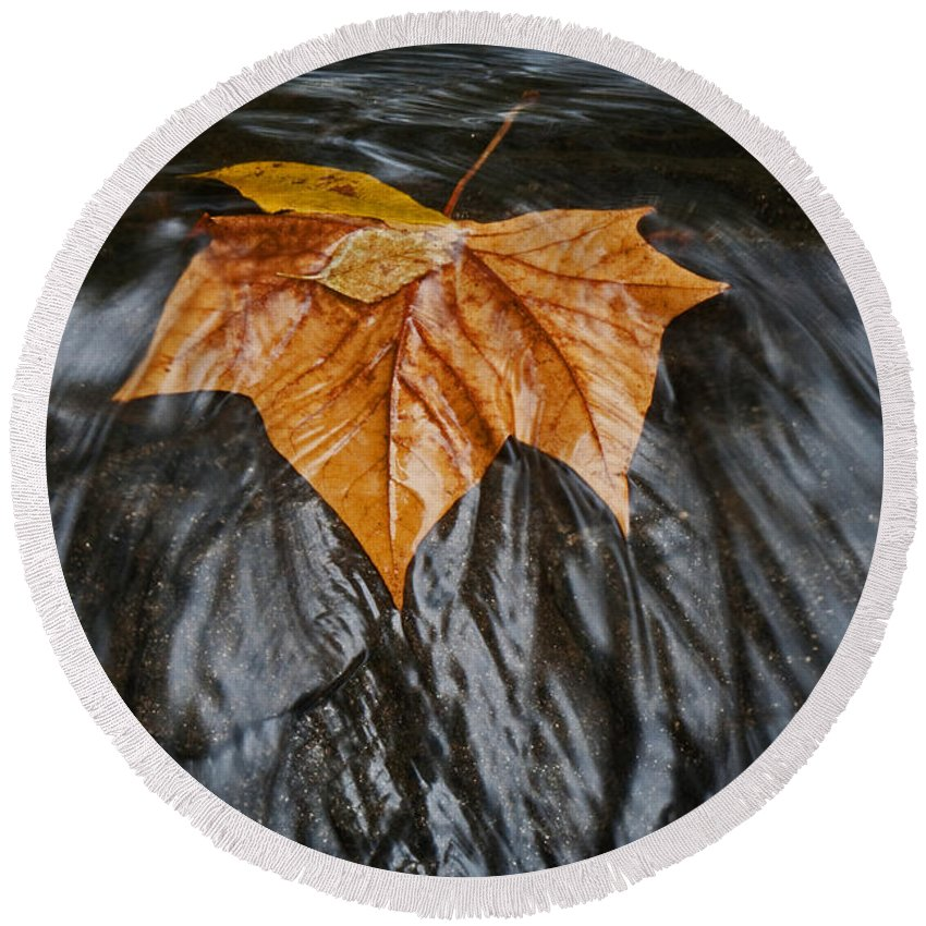 Water Round Beach Towel featuring the photograph Flowing Leaf by David Campbell