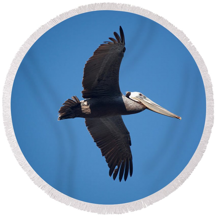 Pelican Round Beach Towel featuring the photograph flying Pelican by Ralf Kaiser