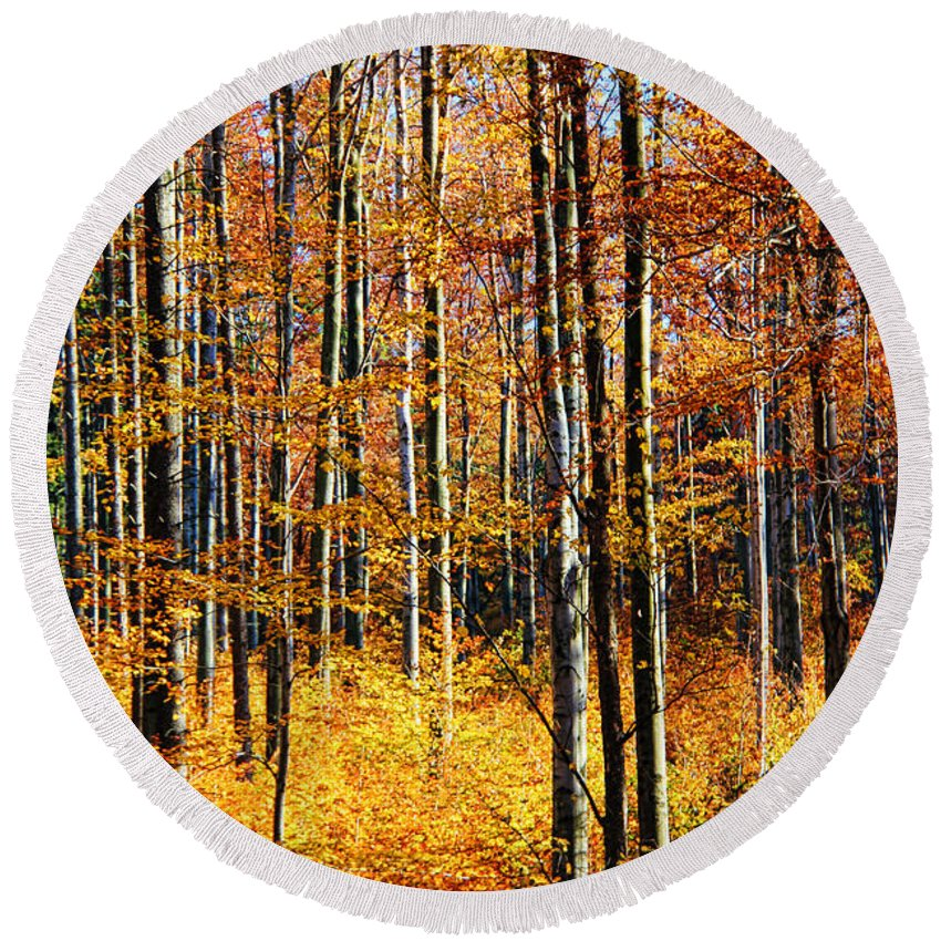 Forest Of Gold Round Beach Towel featuring the photograph Forest Of Gold by Mariola Bitner