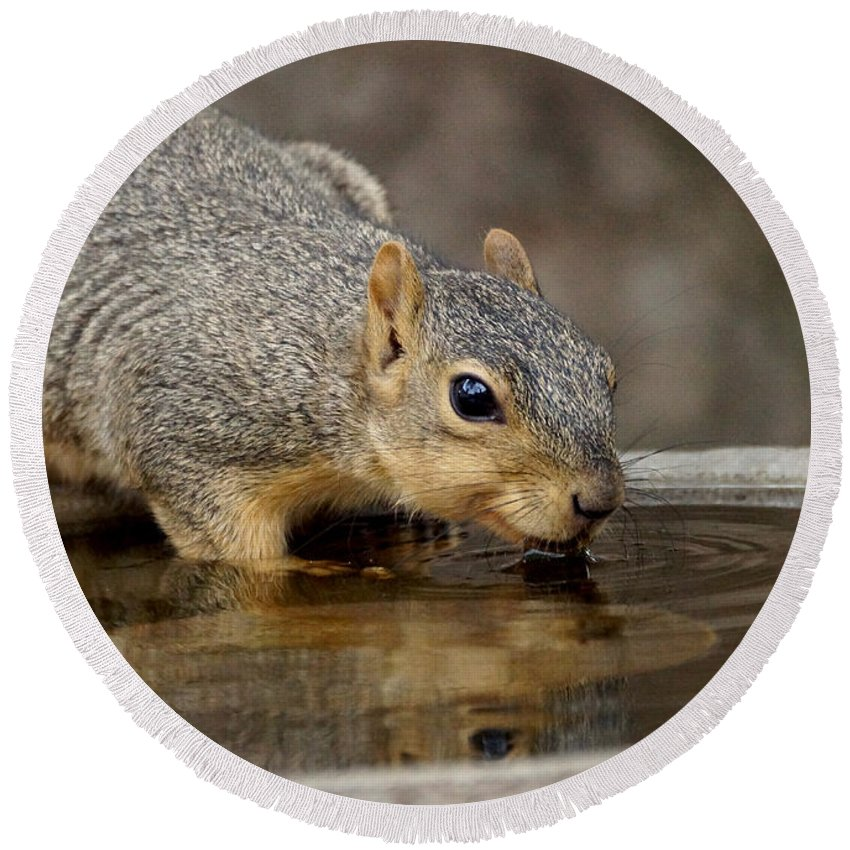 Squirrel Round Beach Towel featuring the photograph Fox Squirrel by Lori Tordsen
