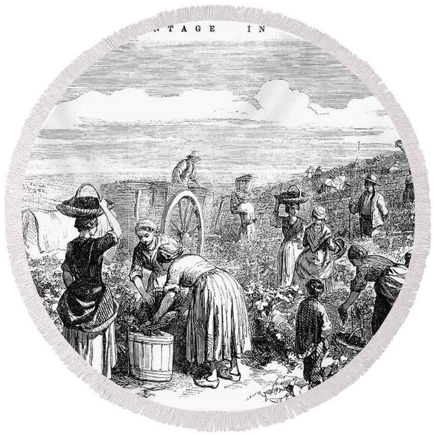 1854 Round Beach Towel featuring the photograph France: Grape Harvest, 1854 by Granger