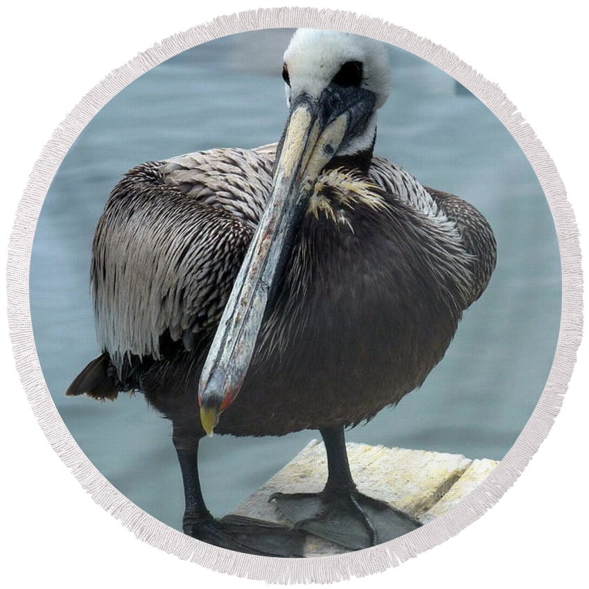 Pelican Round Beach Towel featuring the photograph Friendly Pelican by Carla Parris