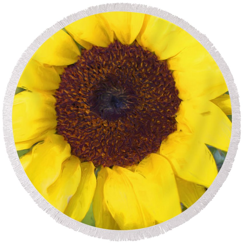 Sunflower Round Beach Towel featuring the photograph Full Bloom by Heidi Smith
