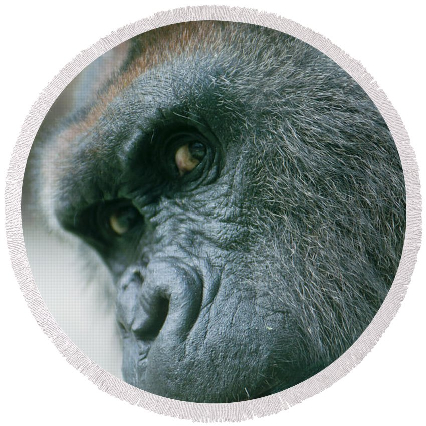 Africa Round Beach Towel featuring the photograph Funny Gorilla by Andrew Michael