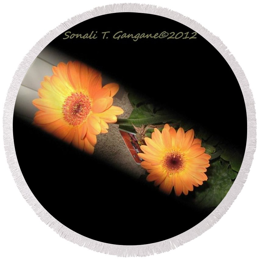 Gerber Daisy Round Beach Towel featuring the photograph Gerber Daisy Unveiled by Sonali Gangane