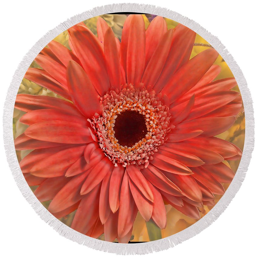 Nature Round Beach Towel featuring the photograph Gerber Delight by Debbie Portwood