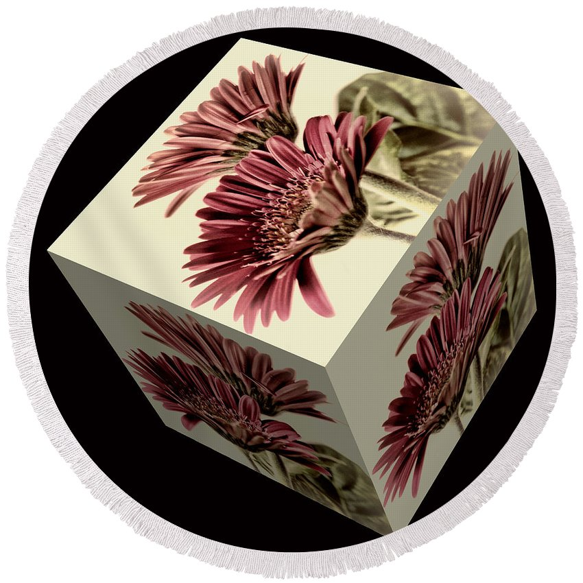 Pink Gerbera Flower Round Beach Towel featuring the photograph Gerbera Cube On Black by Steve Purnell