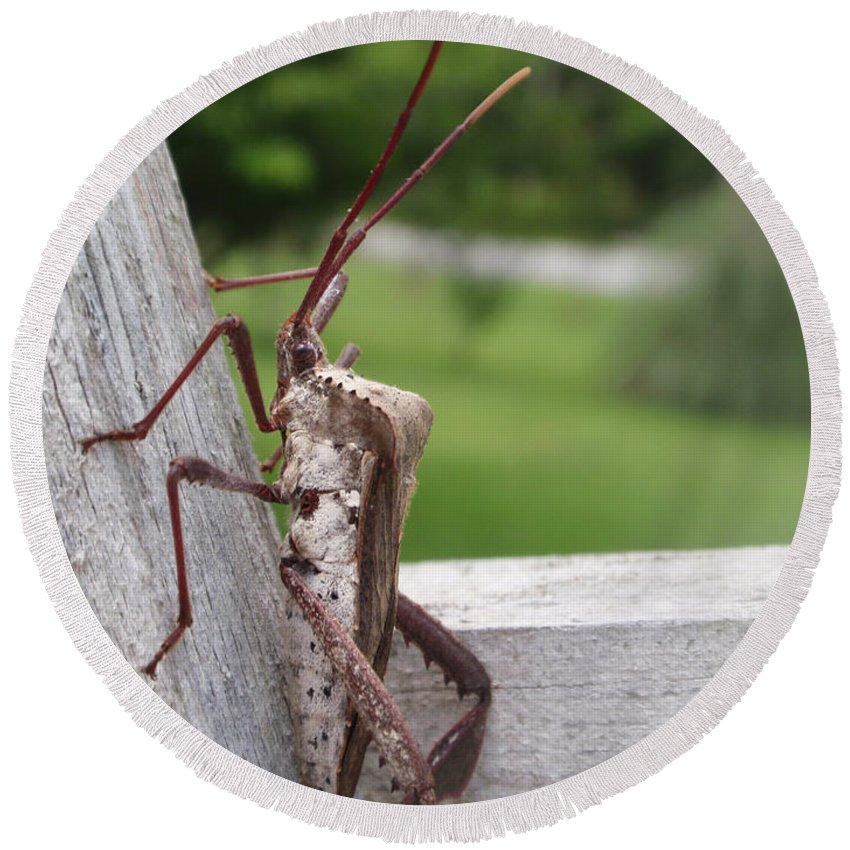 Assassin Round Beach Towel featuring the photograph Giant Assassin Bug by Kathy Clark