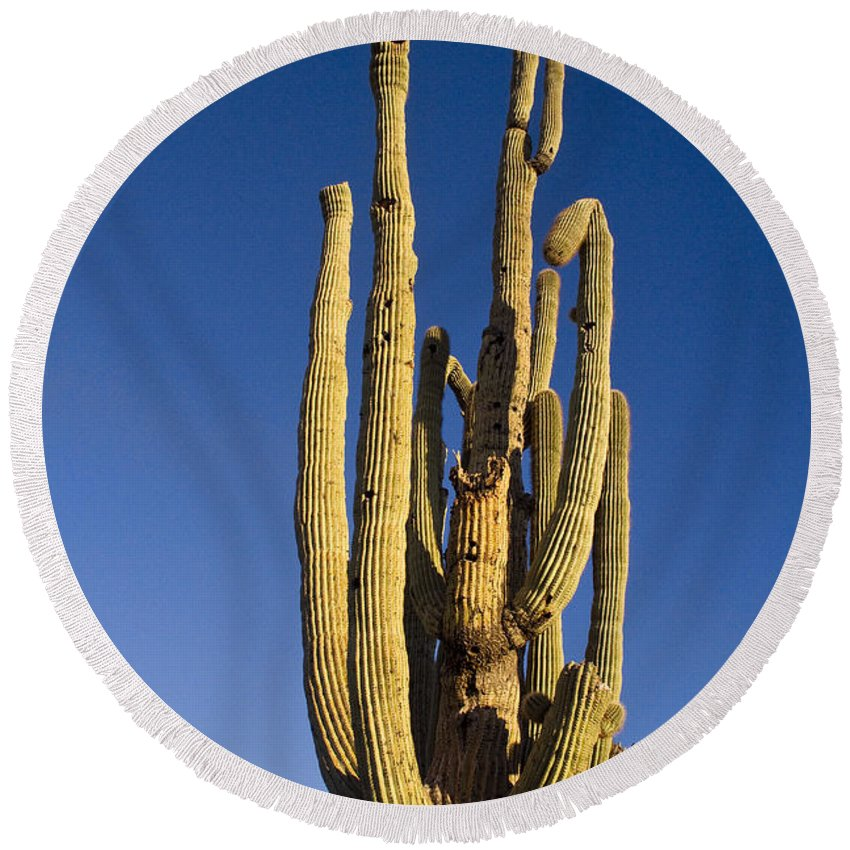 Giant Round Beach Towel featuring the photograph Giant Saguaro Cactus Portrait With Blue Sky by James BO Insogna