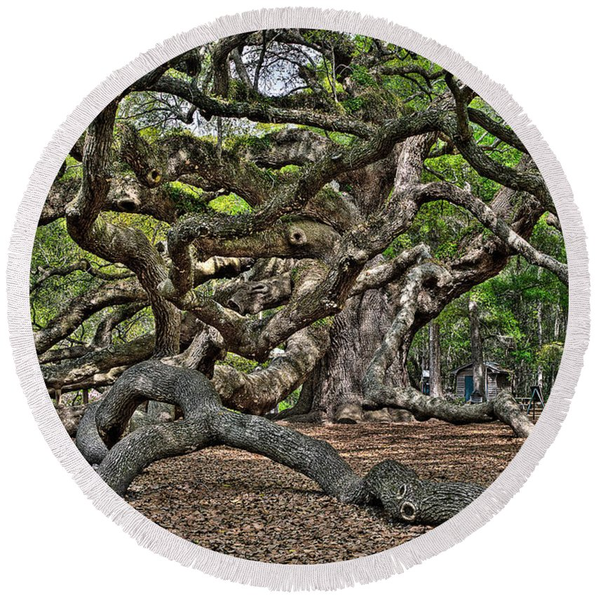 Charleston Round Beach Towel featuring the photograph Gnarled by Andrew Crispi