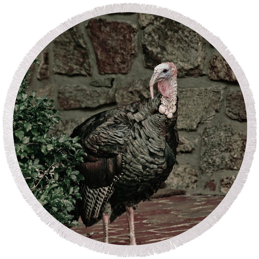 Turkey Round Beach Towel featuring the photograph Gobble Time by Trish Tritz