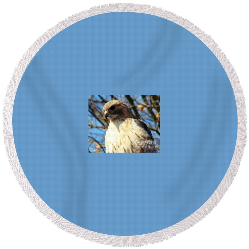 Hawk Round Beach Towel featuring the photograph Golden Eyes by Art Dingo