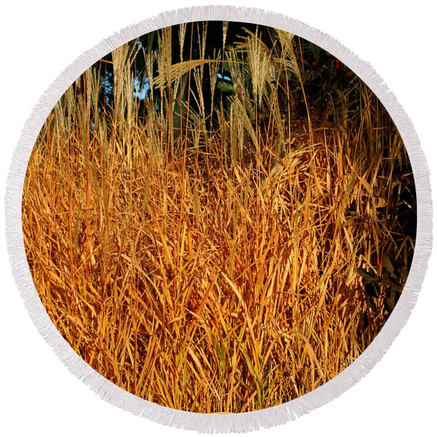 Outdoors Round Beach Towel featuring the photograph Golden Silver Grass by Susan Herber