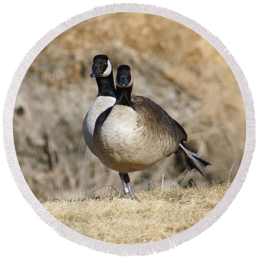 Goose Round Beach Towel featuring the photograph Goose Exercises by Lori Tordsen
