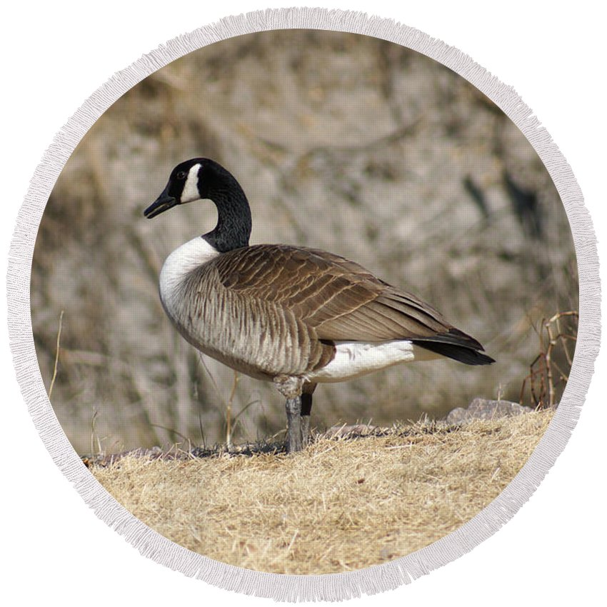 Goose Round Beach Towel featuring the photograph Goose Standing Still by Lori Tordsen