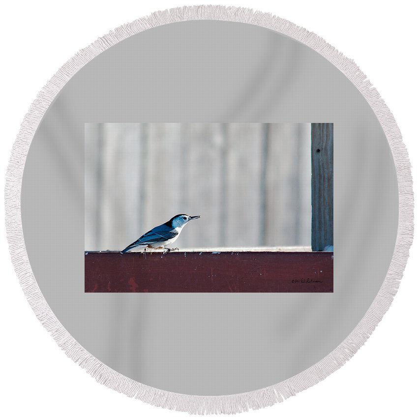 Heron Haven Round Beach Towel featuring the photograph Got It by Edward Peterson