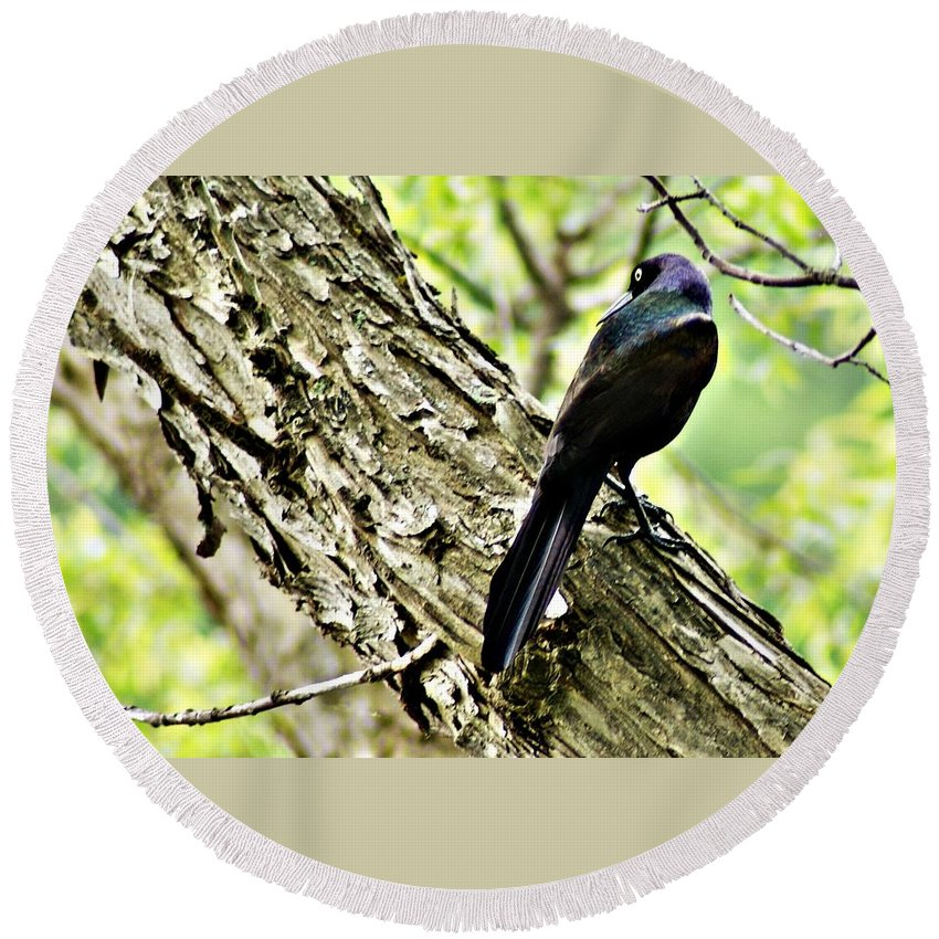Grackle Round Beach Towel featuring the photograph Grackle 1 by Joe Faherty