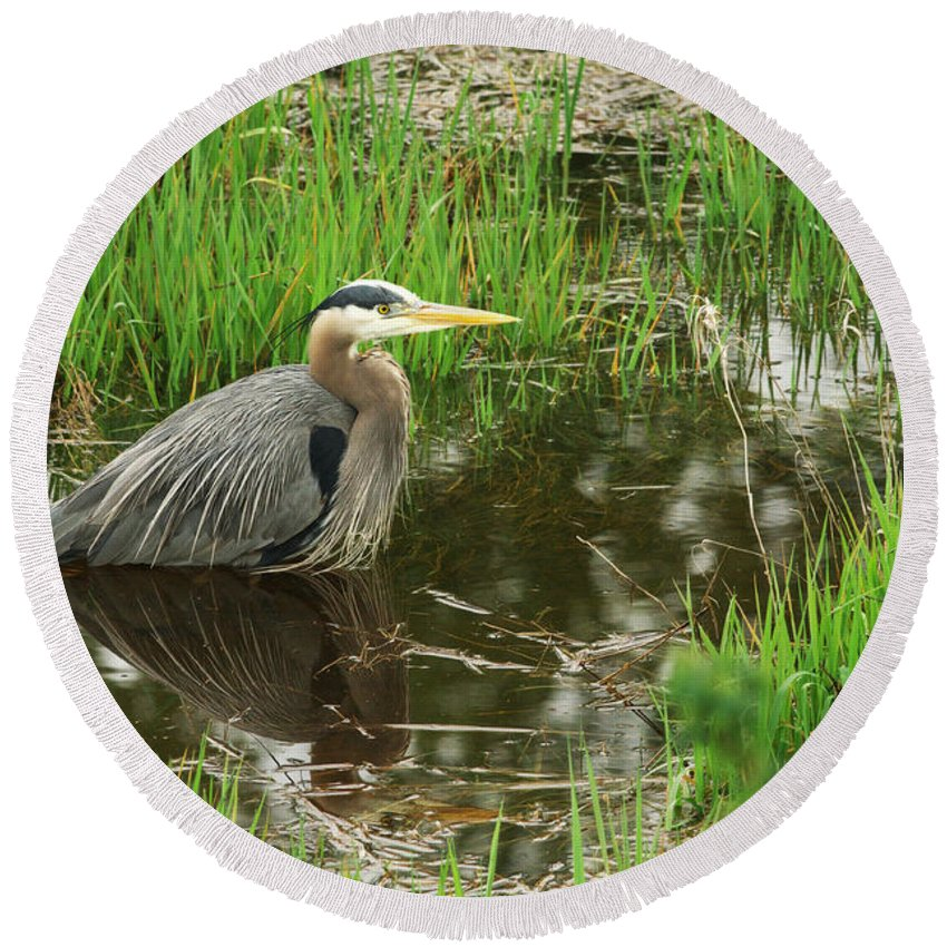 Great Blue Heron Round Beach Towel featuring the photograph Great Blue Heron At The Marsh by Sharon Talson