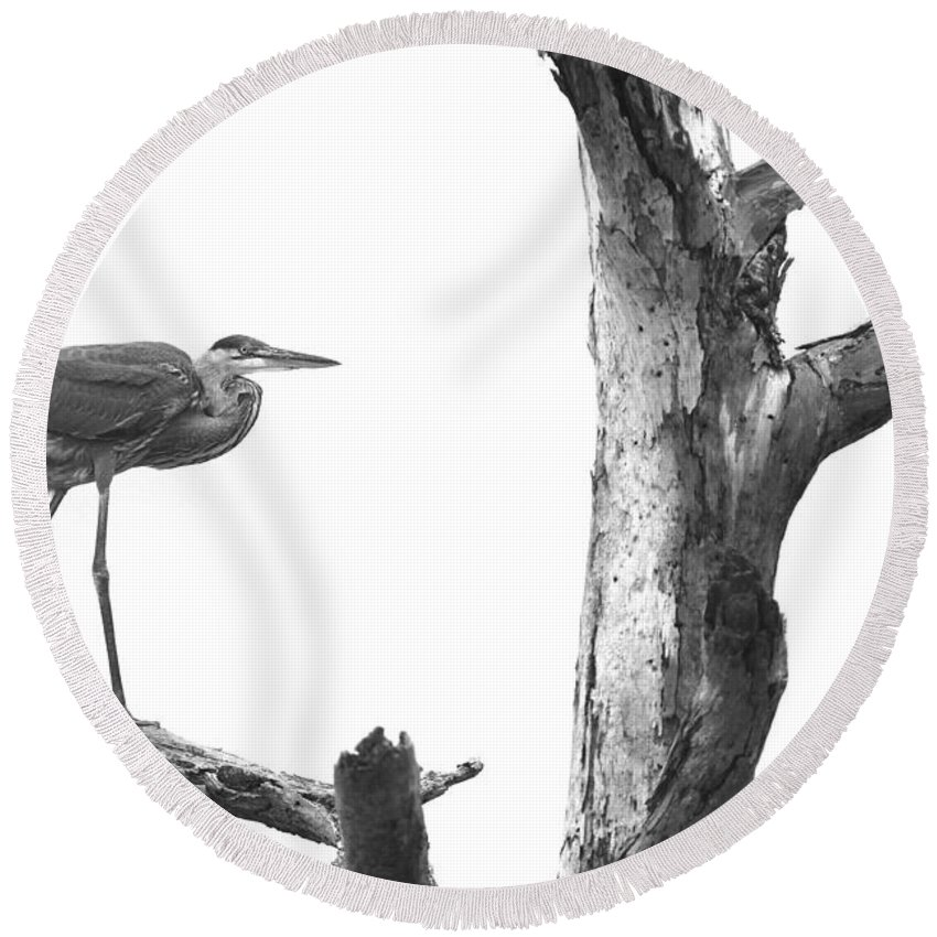 Great Blue Heron Round Beach Towel featuring the photograph Great Blue Heron - Dead Pine by Travis Truelove