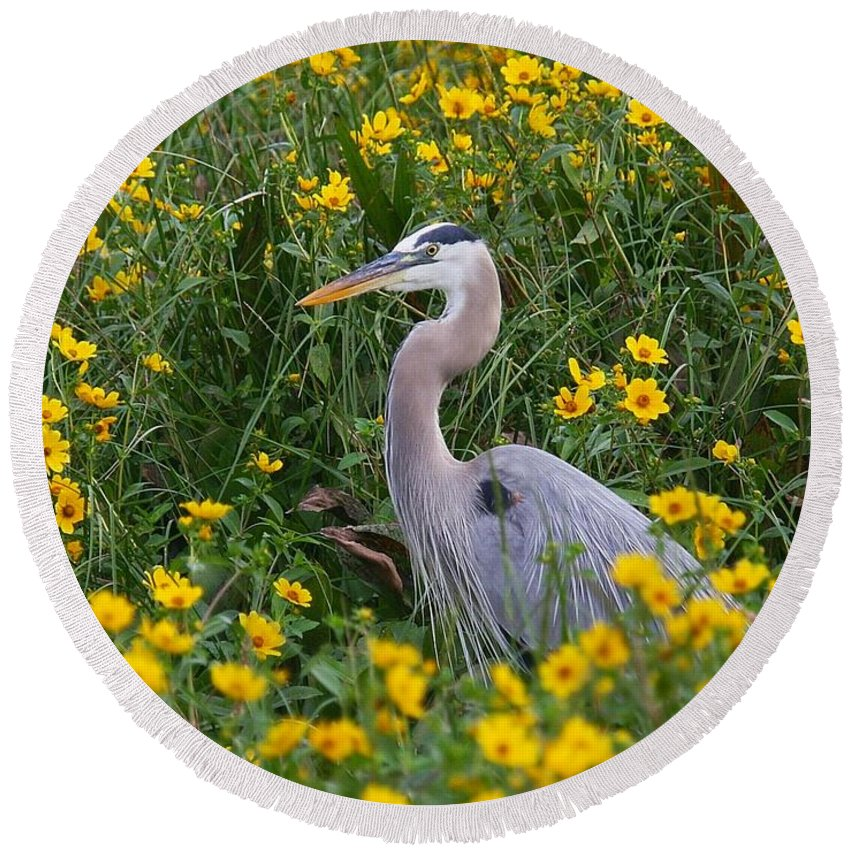 Birds Round Beach Towel featuring the photograph Great Blue Heron In The Flowers by Myrna Bradshaw