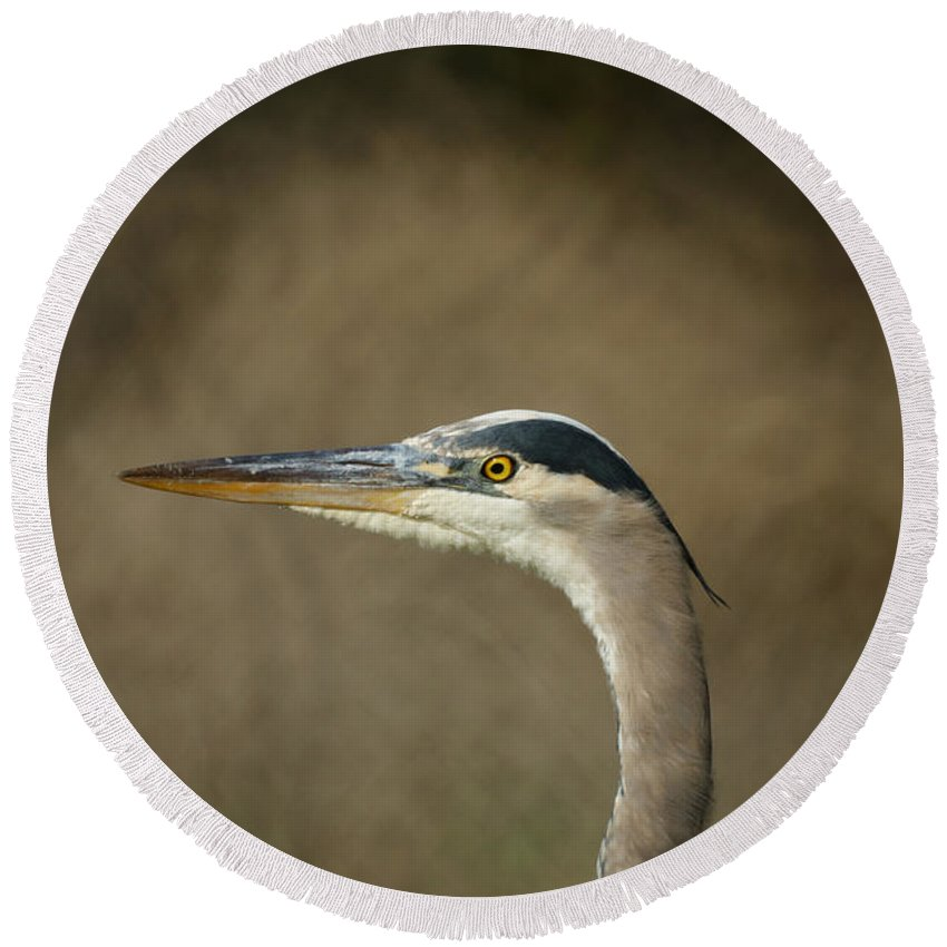 Animals Round Beach Towel featuring the photograph Great Blue Heron Profile by Ernie Echols
