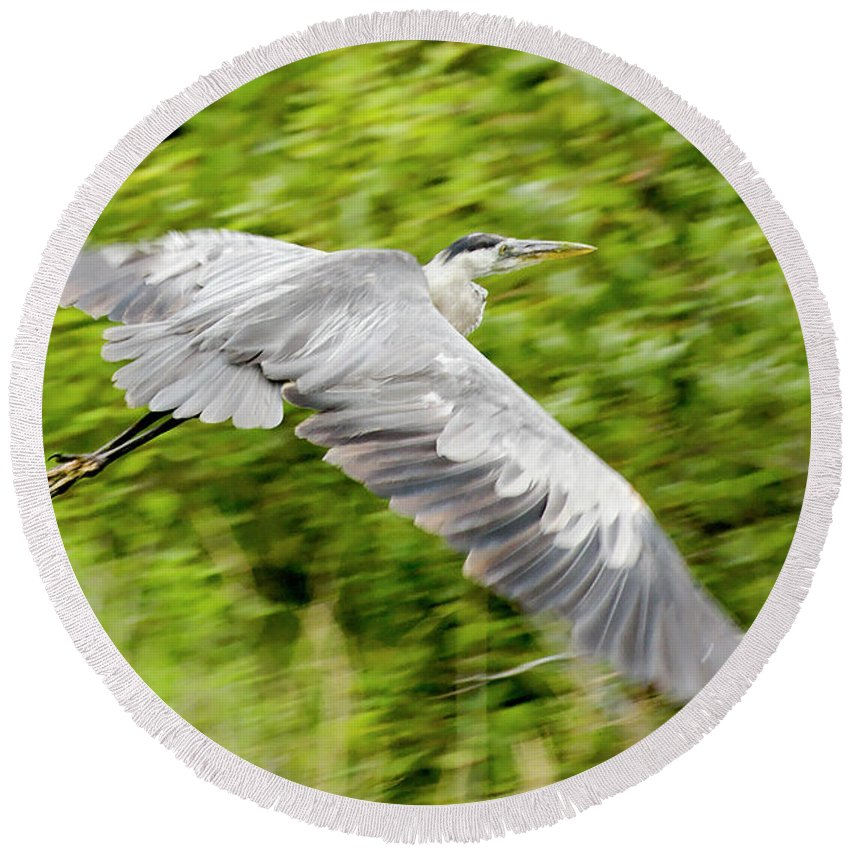 Great Gray Heron Round Beach Towel featuring the photograph Great Blue Heron by Roderick Bley