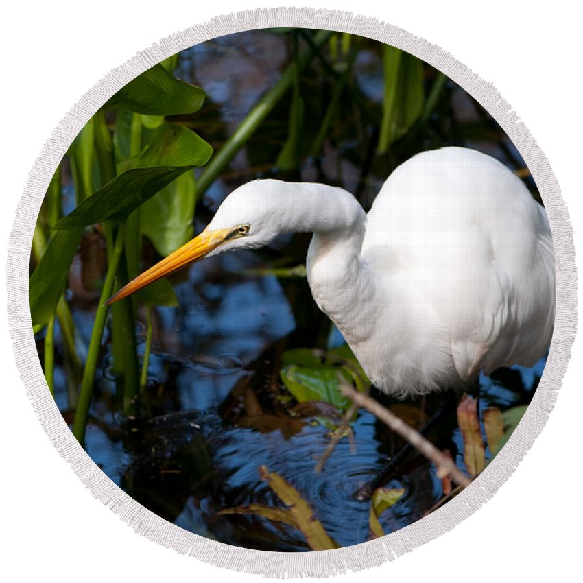 Great Egret Round Beach Towel featuring the photograph Great Egret Fishing by Christine Stonebridge