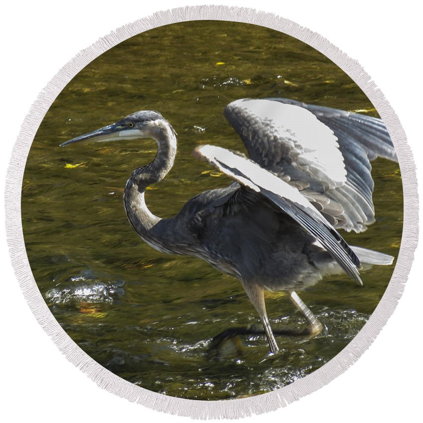 Heron Round Beach Towel featuring the photograph Great Grey Heron Dance by Darleen Stry