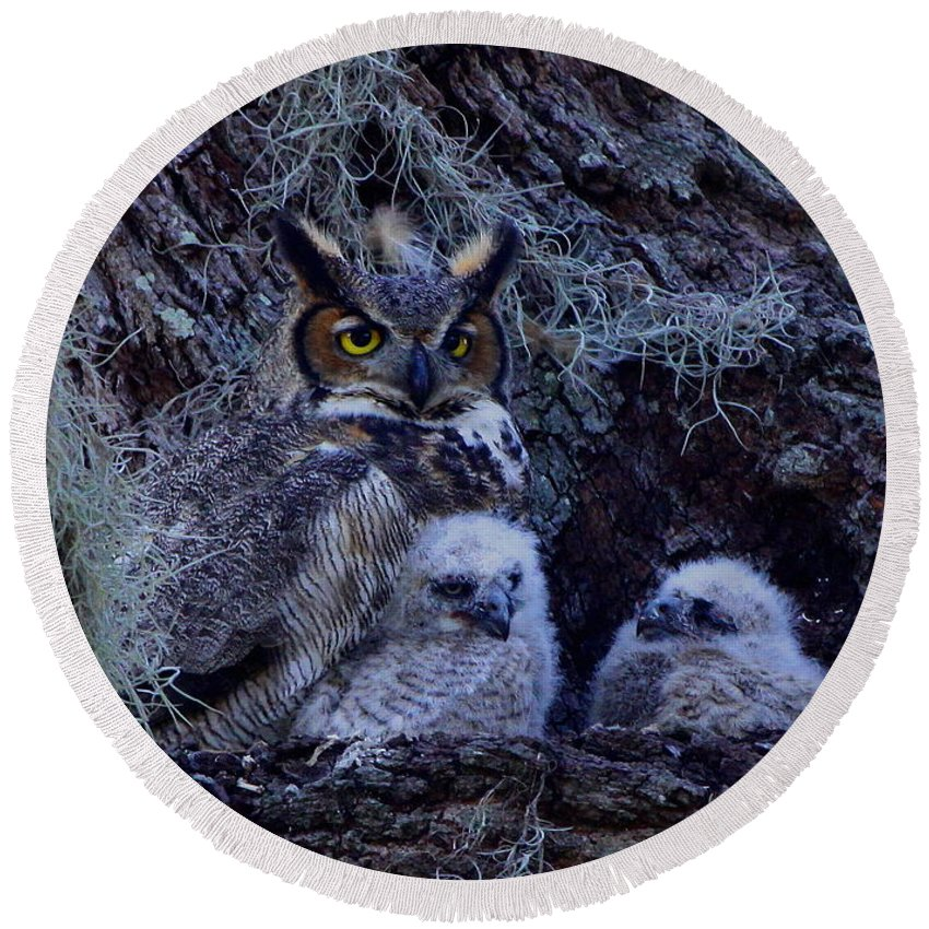 Great Horned Owls Round Beach Towel featuring the photograph Great Horned Owl Twins by Barbara Bowen