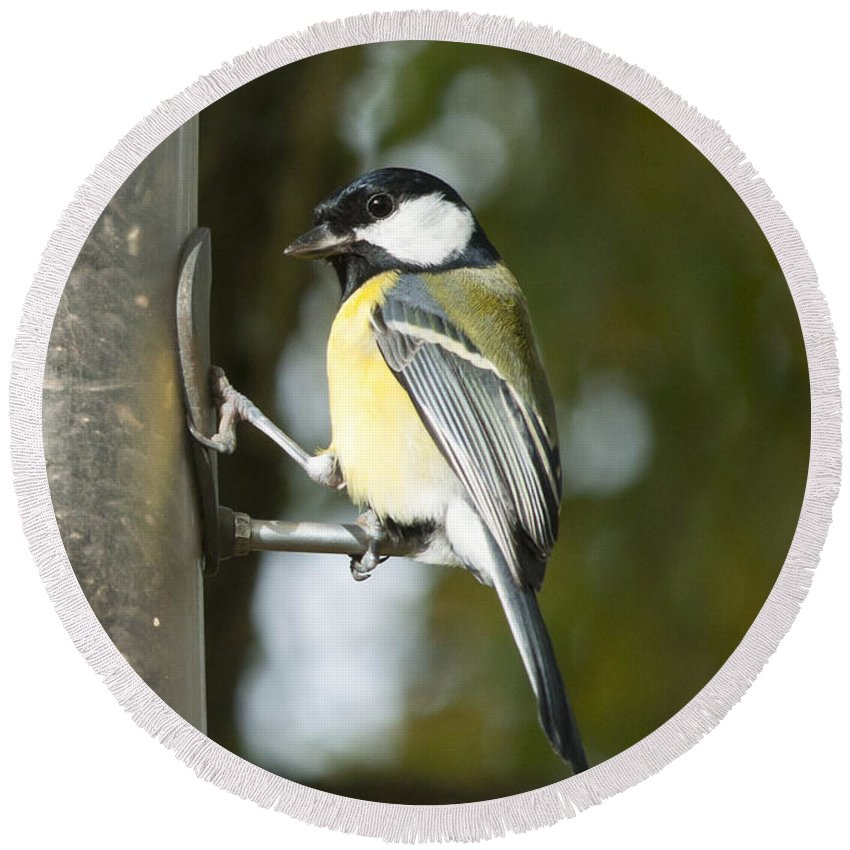 Britain Round Beach Towel featuring the photograph Great Tit by Andrew Michael