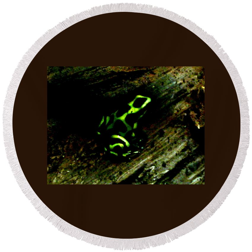 Frog Round Beach Towel featuring the photograph Green And Black Poison Dart Frog by April Patterson
