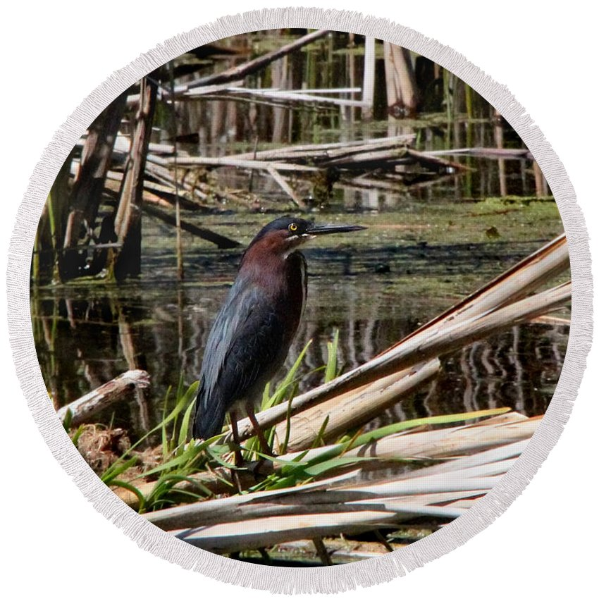Bird Round Beach Towel featuring the photograph Green Heron by Davandra Cribbie