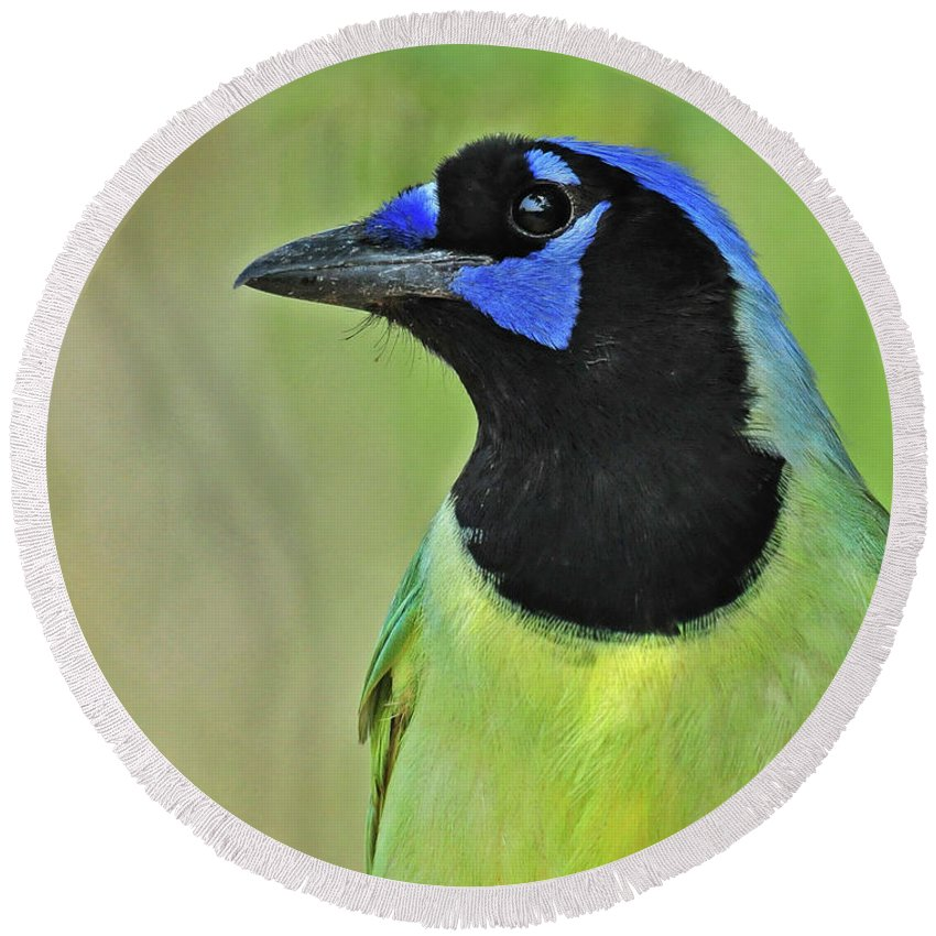 Green Jay Round Beach Towel featuring the photograph Green Jay Portrait by Dave Mills