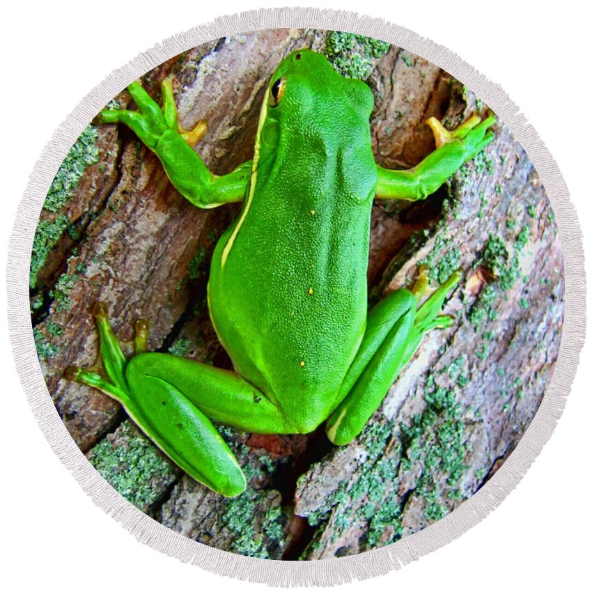 Round Beach Towel featuring the photograph Green Tree Frog by Debbie Portwood
