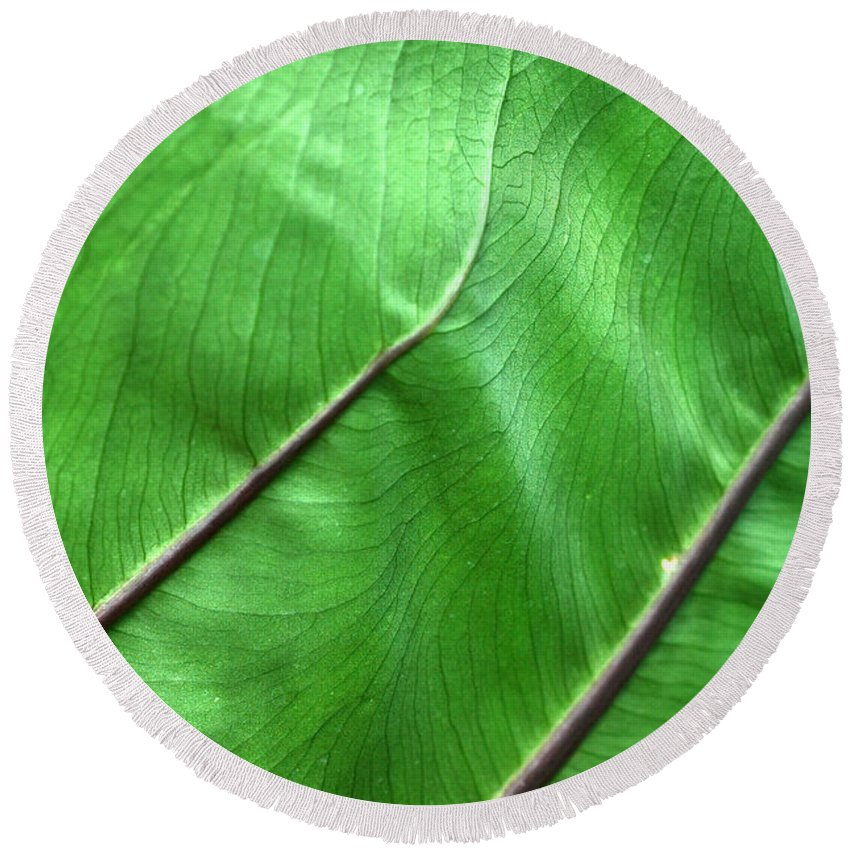 Green Round Beach Towel featuring the photograph Green Veiny Leaf 2 by Mike Nellums