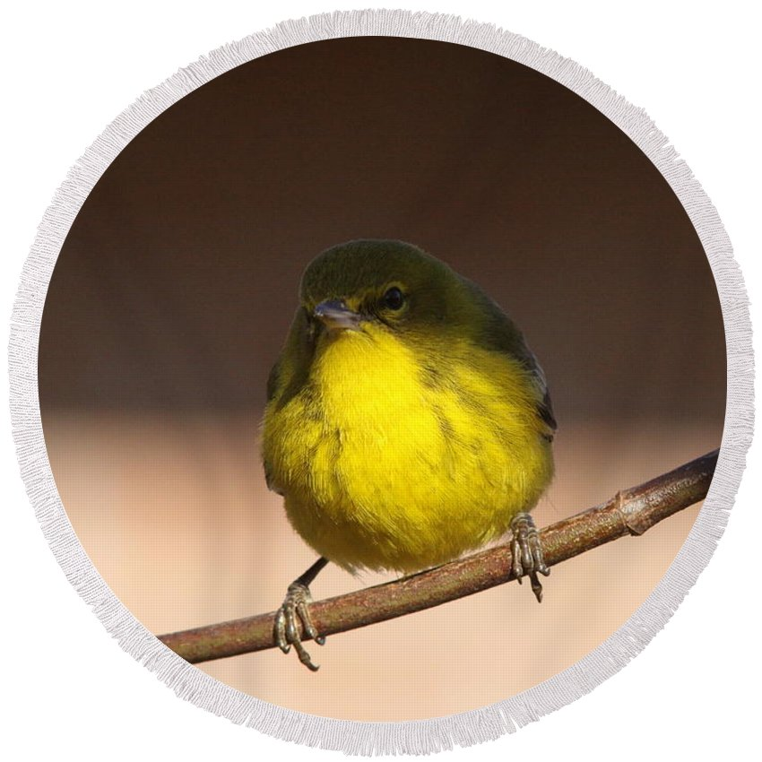Pine Warbler Round Beach Towel featuring the photograph Half N Half by Travis Truelove