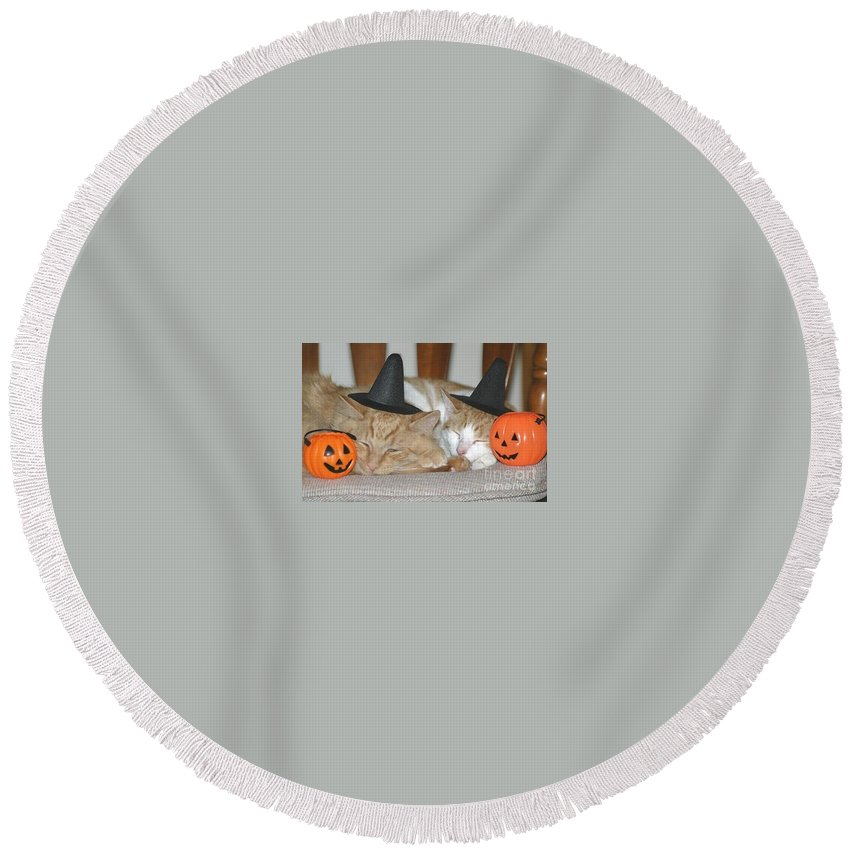Halloween Round Beach Towel featuring the photograph Halloween Party Animals by Living Color Photography Lorraine Lynch
