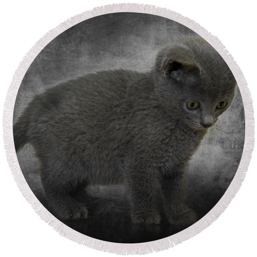 Cat Round Beach Towel featuring the photograph Hannah's Kitten by Ron Jones