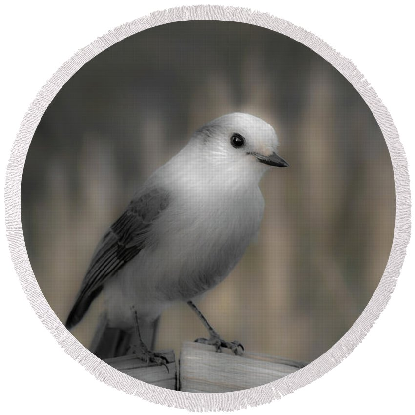 Americas Round Beach Towel featuring the photograph Happy Gray Jay by Roderick Bley