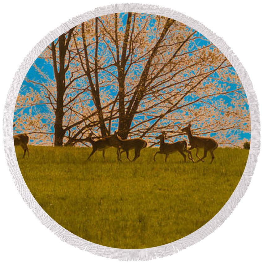 Deer Round Beach Towel featuring the photograph Has Anyone Seen Rudolph by Trish Tritz