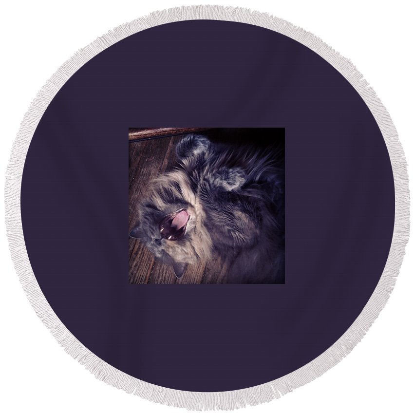 Fangs Round Beach Towel featuring the photograph Has #fangs. Not Afraid To Use 'em by Katie Cupcakes