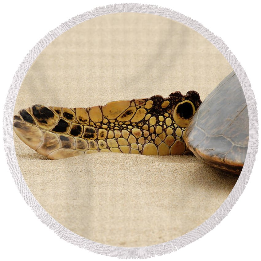 Americas Round Beach Towel featuring the photograph Hawaiian Green Turtle Rear Tail Fin by Roderick Bley